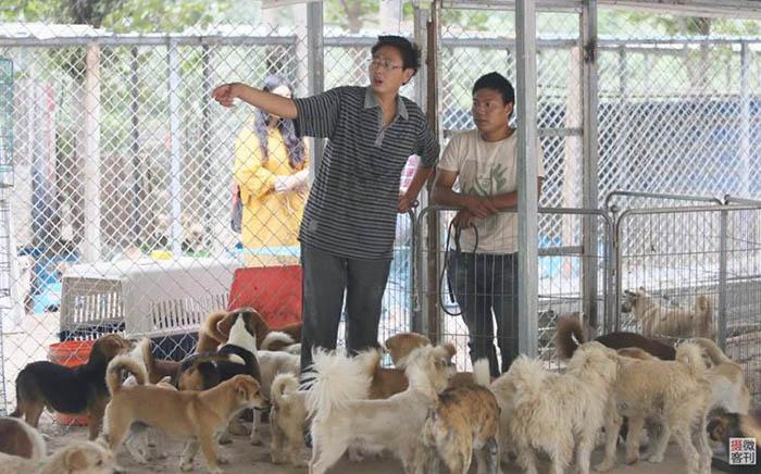 Чжоу Юсонг (Zhou Yusong) известен сейчас как «Хранитель собак.»