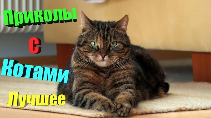 Свежая подборка смешных котиков для поднятия настроения