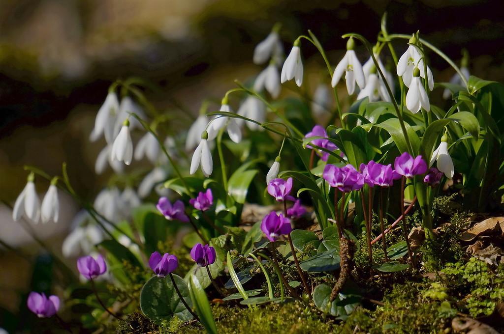 10 дел в саду, которые нужно успеть сделать до апреля