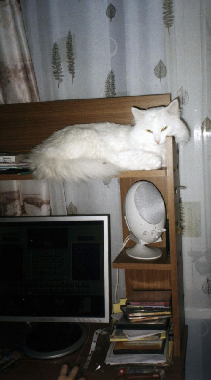 Ты совершенно не следишь за котом! (Оля Дмитриева)