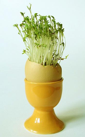 Украшения стола из яичных скорлупок