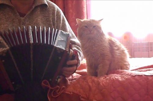 Сказочный рыжий кот любит гармонь