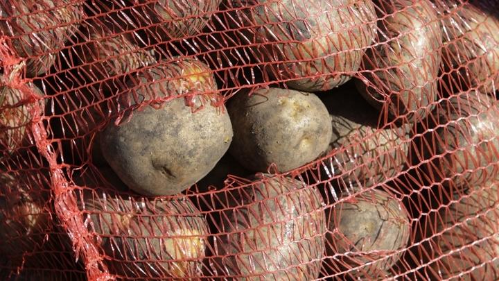Картофель убивает: Чем опасе…