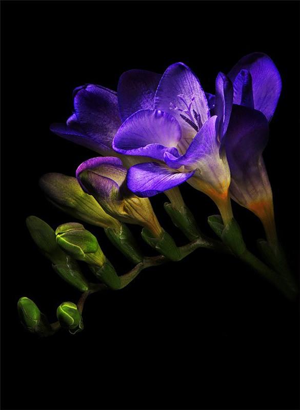 Фотографии цветов от фотографа Елены Ереминой