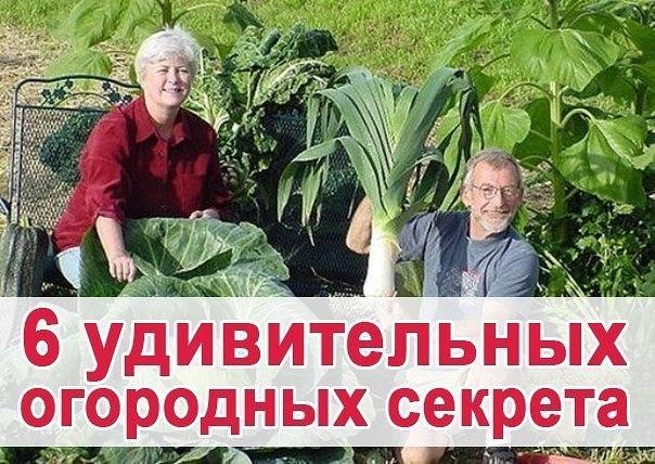 6 удивительных огородних секретов