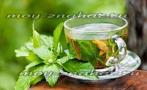 Чай из листьев смородины: польза