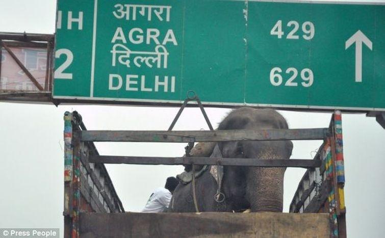 Radga07 Спасение слона, проведшего 50 лет в неволе, который плакал от счастья