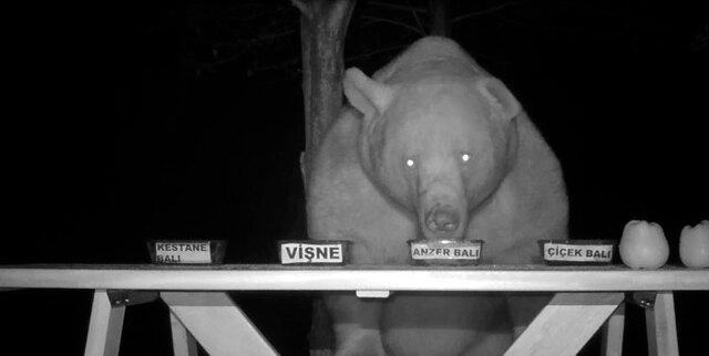 Фермер ловит медведей, ворующих мед, и решает привлечь их к дегустации меда