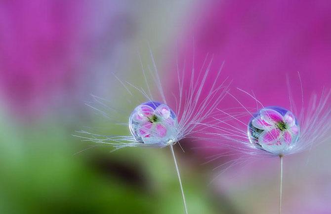 Волшебный макромир японского фотографа Мики Асаи