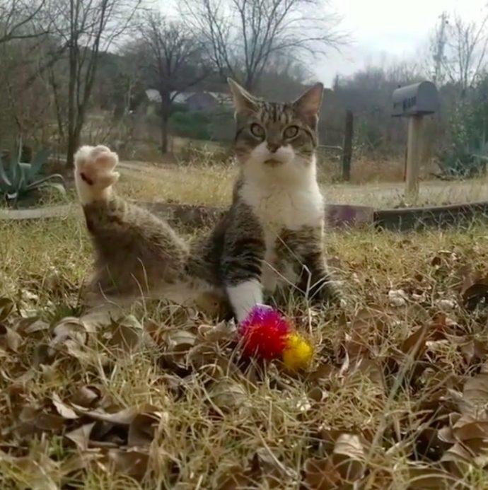 Удивительно позитивный и смешной кот! То, что он делает на видео, заставляет сердце сжиматься