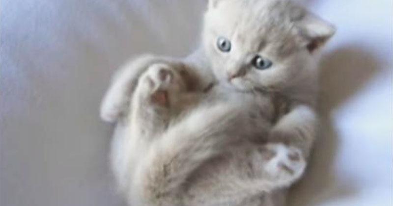 Самостоятельный котенок реши…