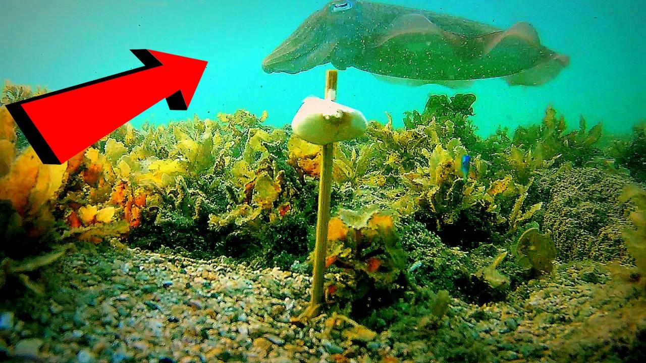 Реакция рыбы на чеснок! Подводная съемка! Сиамский залив