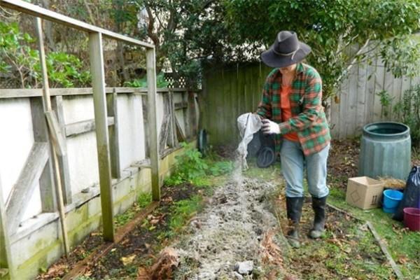 Внесение доломитовой муки на гряды