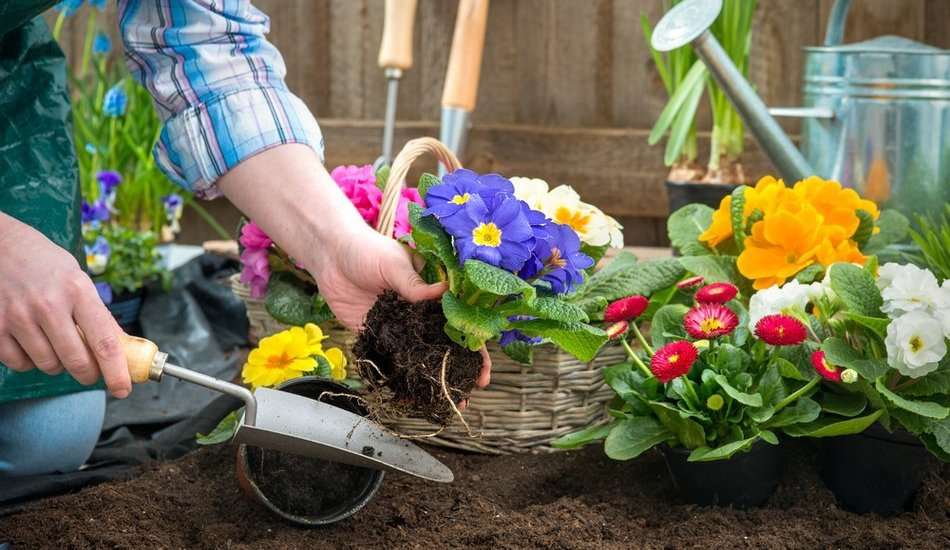 Как мы сажали цветы в городе 75