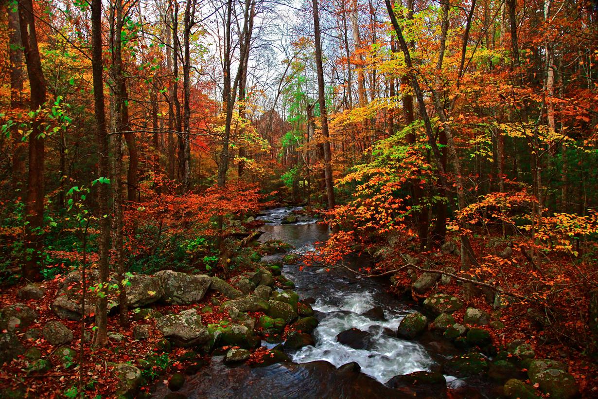 Smoky mountain autumn pictures Noah's Ark - Smoky Mountain Chalet Rentals