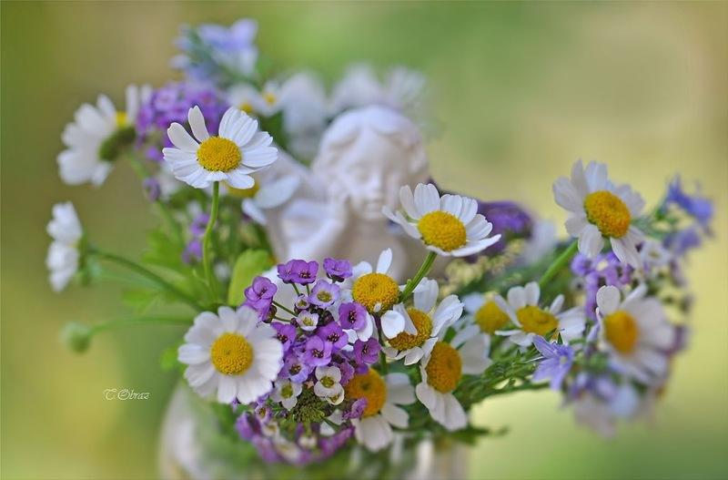 NewPix.ru - Нежные цветы в фото натюрмортах Татьяны Образ