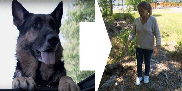Бродячая собака тащила меня 40 метров после аварии, и нас, наконец, заметили. Карьера пса пошла в гору