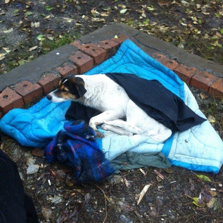 Беспомощную собаку выгнали из дома