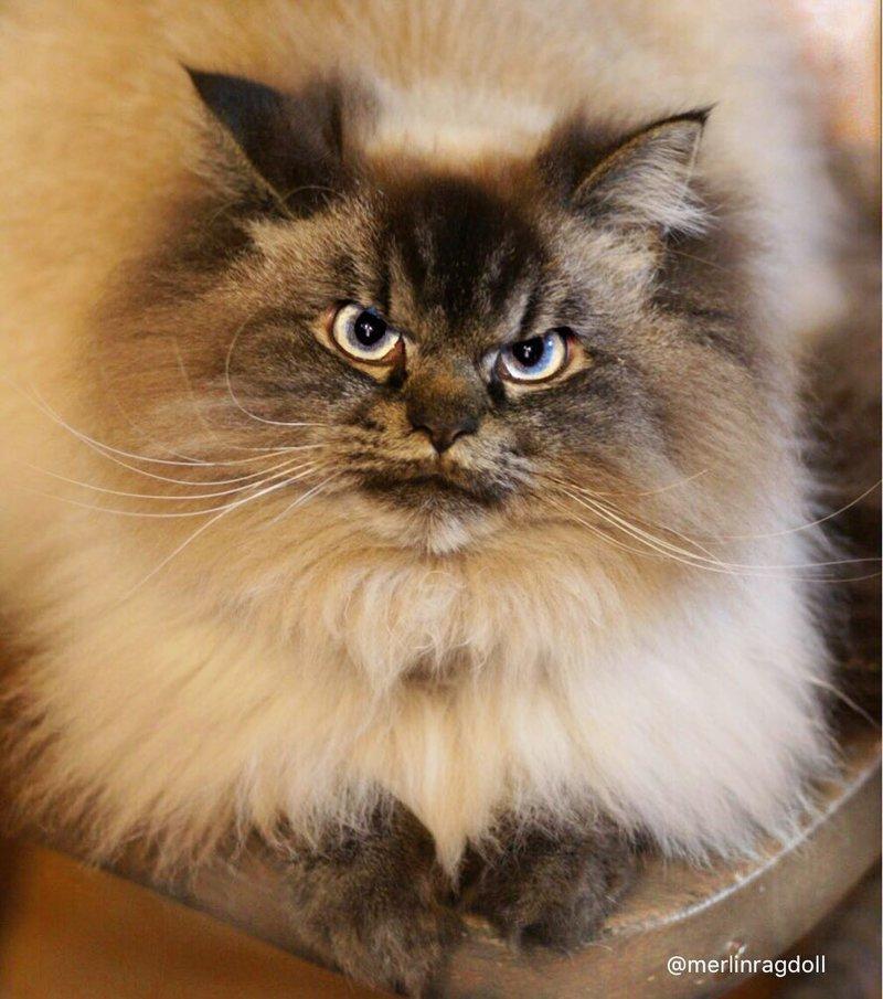 Самый сердитый котя в мире