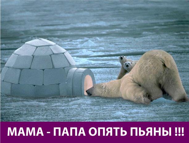 Белый медведь - прикольный