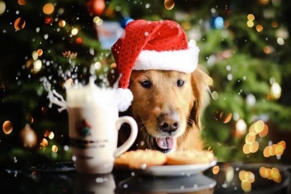 Новый год 2018 — Что готовить, что должно быть на столе в год собаки