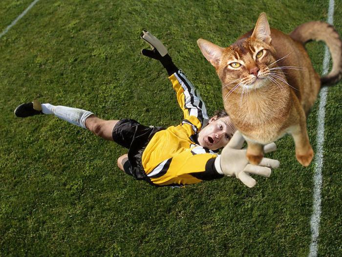 Что будет, если добавить в футбол немного котов? забавно, коты, творчество, фото, фотожабы, фотошоп, футбол, юмор