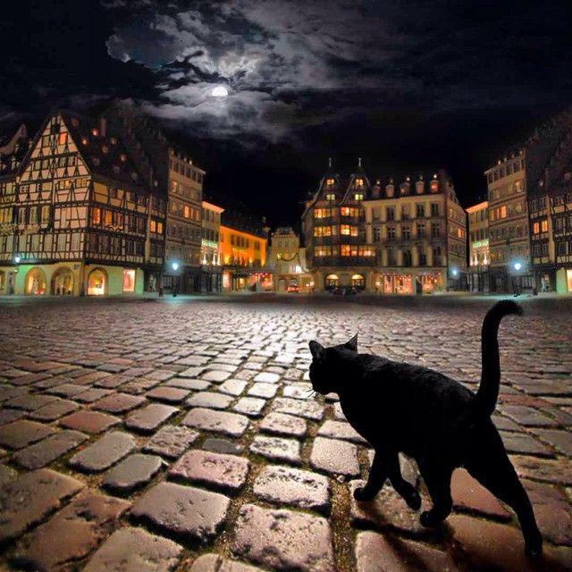 Мистический пражский черный кот
