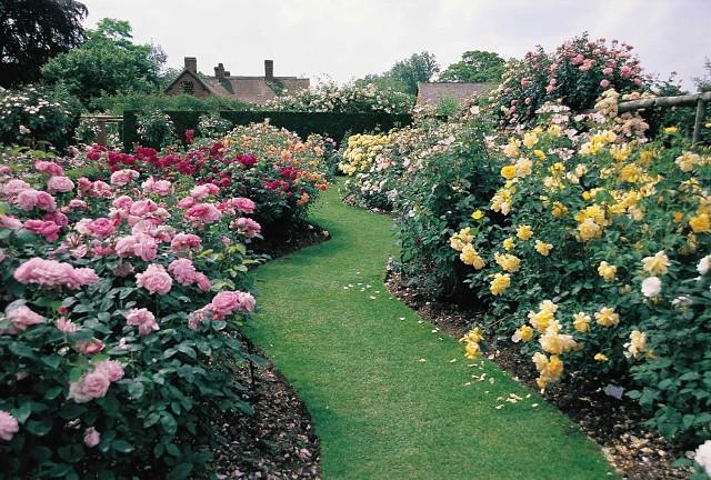Розы для полноценного развития нуждаются в удобрениях
