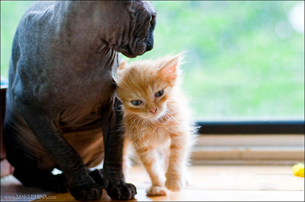 История спасения котенка и обретение дома кот, история спасения, выхаживание животных, пристройство, новый дом, длиннопост