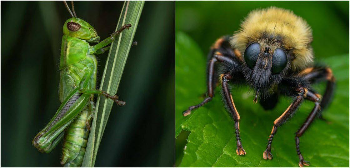 Макро-фотографии насекомых И…