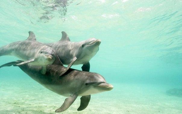 Дельфин - разумное животное