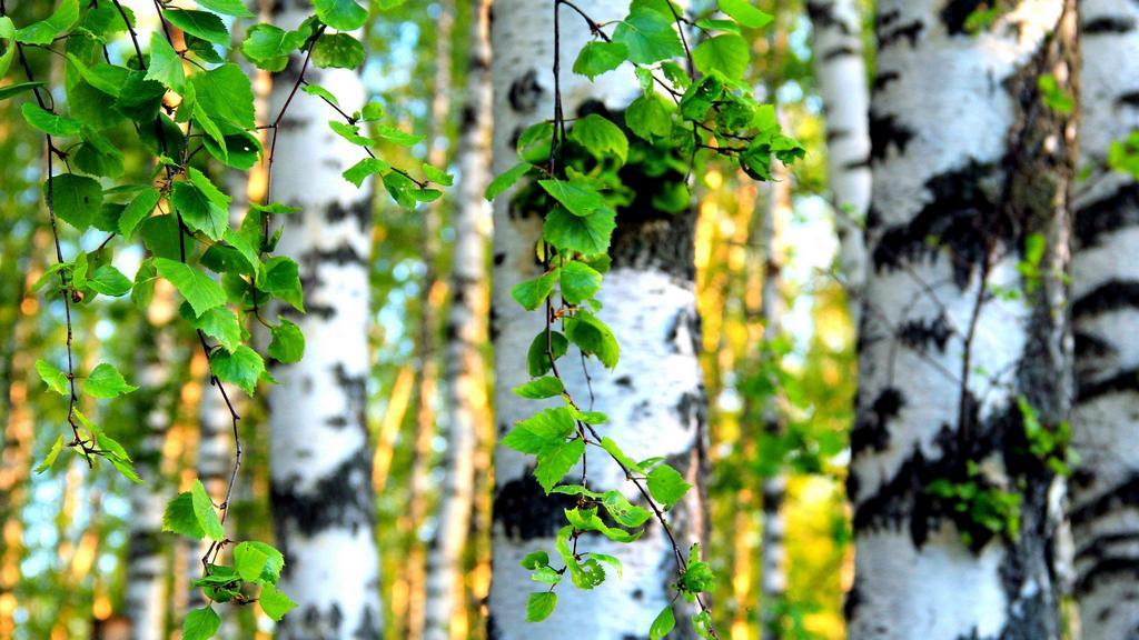 Полезная весенняя листва (рецепты)