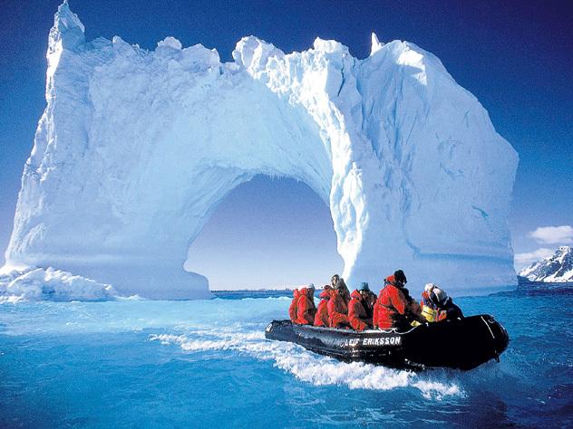 Что скрывает осьминог из Антарктиды