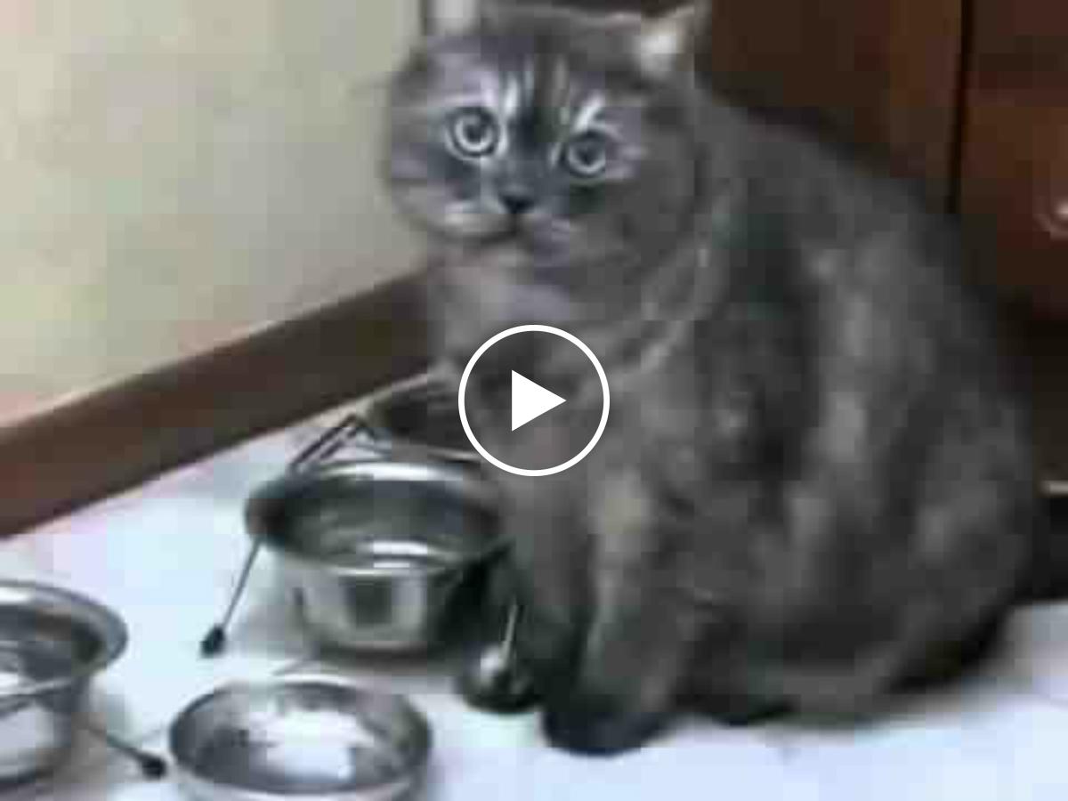 Хозяин услышь её, твоя кошка голодная!
