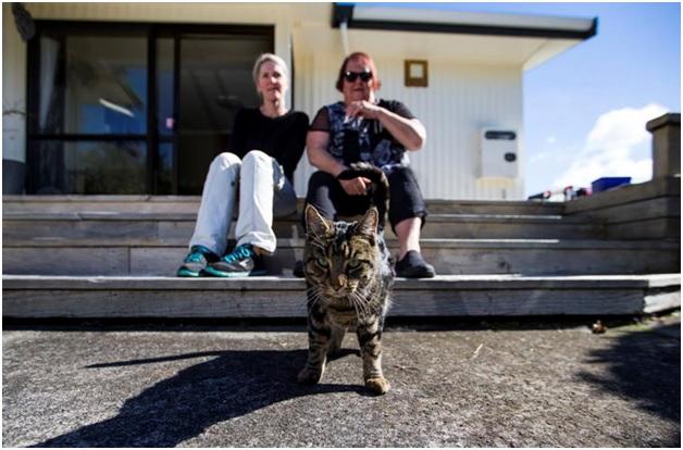 Кот-двоеженец или полигамия среди животных