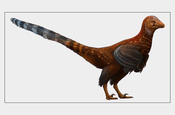 В России впервые нашли яйцо птицеподобного динозавра