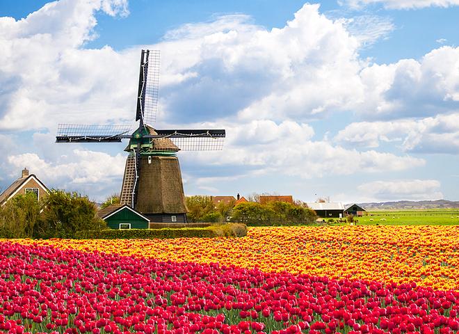 Самые красивые цветочные долины мира