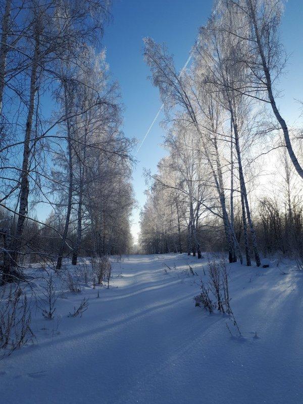 Мы на лыжи? Быть морозу!