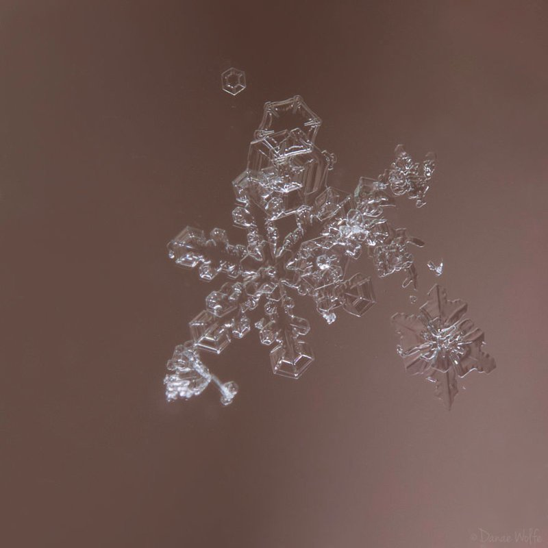 """""""Каждая снежинка уникальна - как отпечатки пальцев и полоски у зебры"""" интересное, макро, макро-съемка, полезное, снежинка, советы, фото, фотография"""