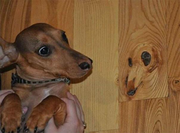 Собачий пол парейдолия, похоже да не то же, похоже на лицо