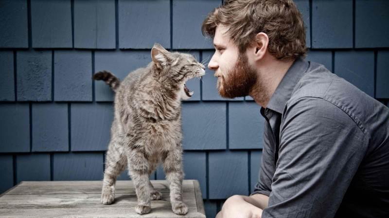 О приручении мужчин и котов