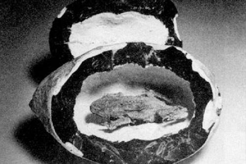25 мая 1776 года в США была обнаружена замурованная жаба. Правда, этой американской леди не повезло — за время своего заключения на 180-метровой глубине в угольной шахте Маклин (штат Пенсильвания) она успела мумифицироваться. По свидетельству геолога Джеймса Стивенсона, «она усохла в два раза по сравнению с размерами живого земноводного. Ее туловище еще не успело окаменеть, оно легкое и мягкое...» То есть жаба скончалась относительно недавно. А до того успешно существовала в толще угля, на образование которого потребовался не один миллион лет.