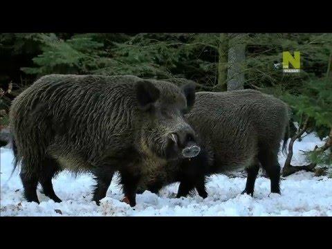 Дикая природа Австрии. Познавательный фильм