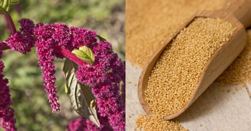 семена дыни полезные свойства