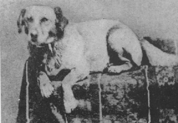 Фотография собаки Авраама Линкольна по кличке Фидо, 1861 год. история, события, фото