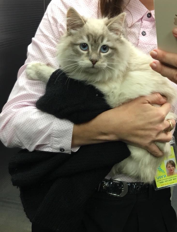 Женщина бросила кошку на стойку регистрации в аэропорту