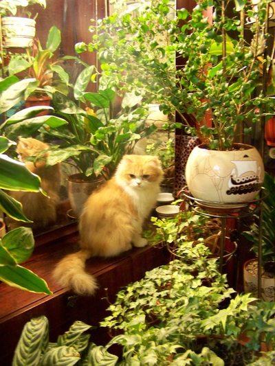 Как создать зимний сад в квартире