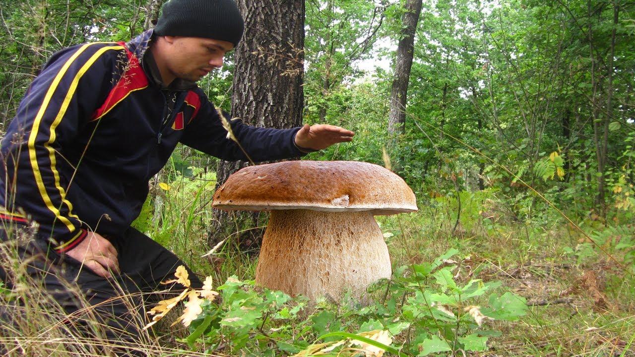 Самые большие гриб