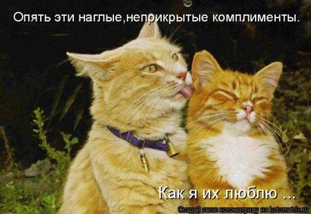 Смешные фото кошек и котят)))