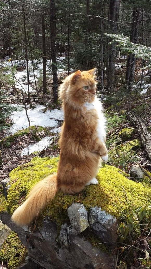 catrules06 15 правил жизни настоящего кота